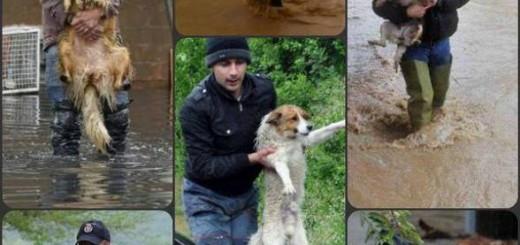Der Balkan hat ein Herz für Tiere