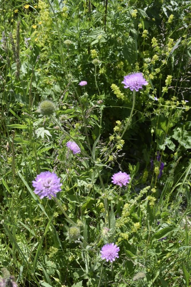 Kräftige Farben der wild wachsenden Blumen sind wahre Meditation für die Augen (Foto: balkanblogger)